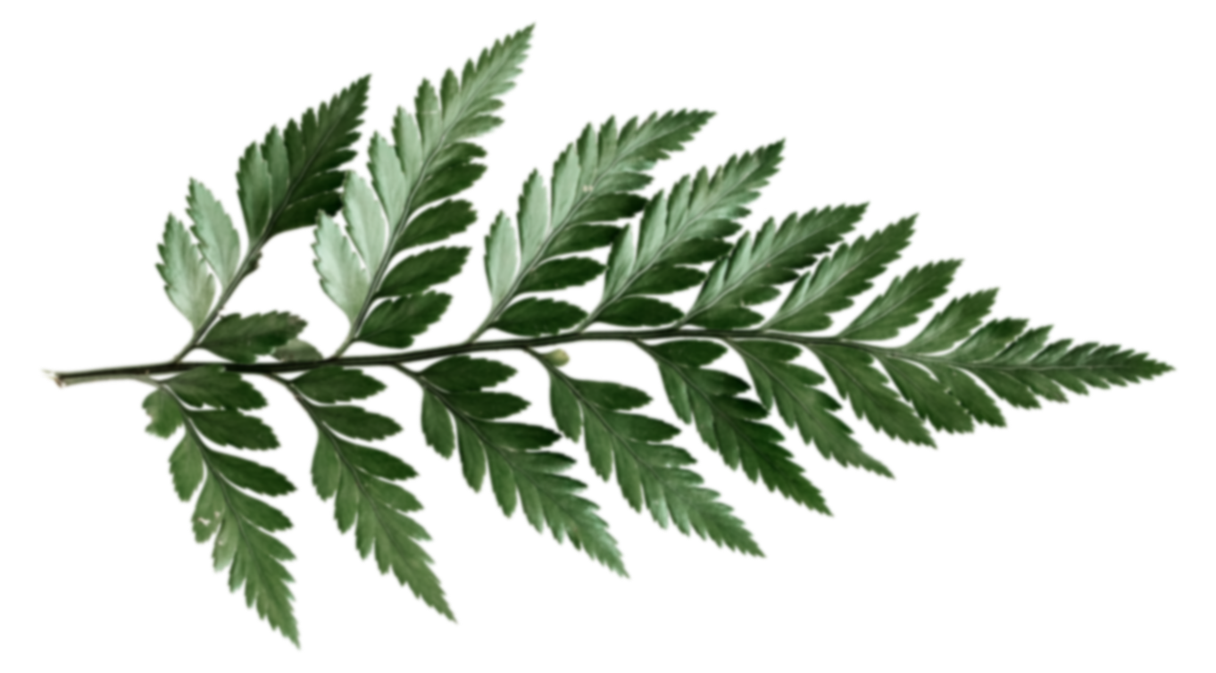 foliage-1