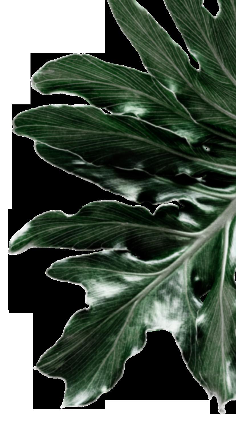 foliage-3